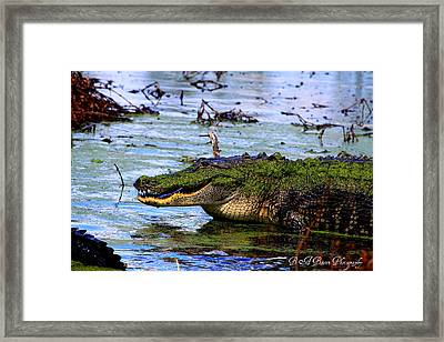 Framed Print featuring the photograph Gator Growl by Barbara Bowen