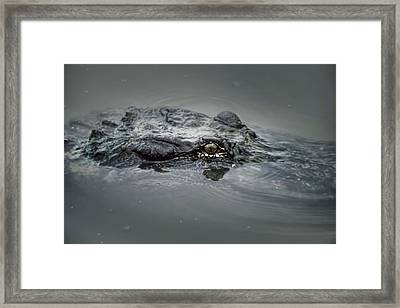 Gator Head  Framed Print