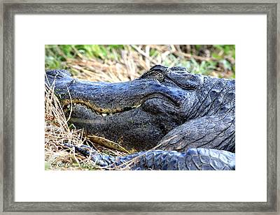 Framed Print featuring the photograph Gator Head by Barbara Bowen