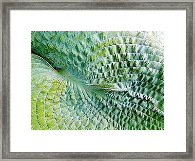 Gator Hosta Framed Print