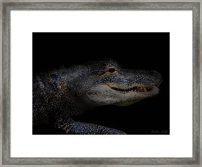 Gator In Black Framed Print