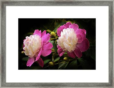 Gay Paree Peony Framed Print by Jessica Jenney
