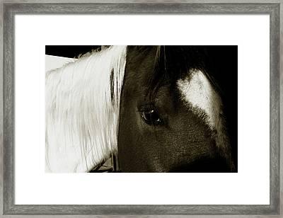 Gaze  Framed Print by Toni Hopper