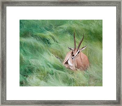 Gazelle In The Grass Framed Print by Joshua Martin