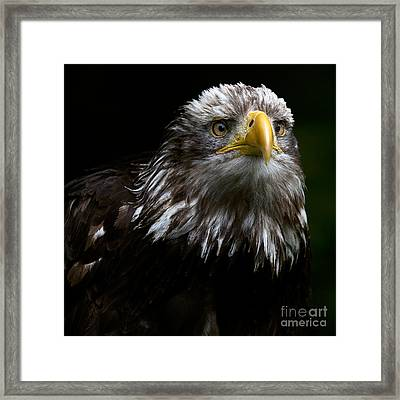 Gazing Framed Print