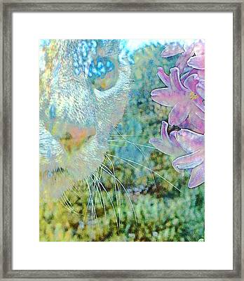 Gazing Out Framed Print by Dorothy Berry-Lound