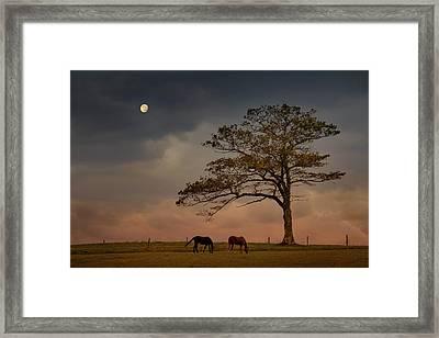 Gazing Peacefully Framed Print by Nancy Rose