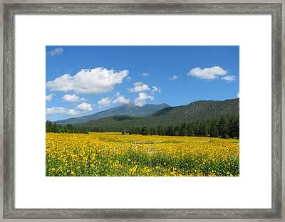 Gazing Serene Framed Print