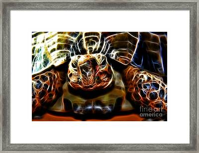 Gazing Turtle Framed Print