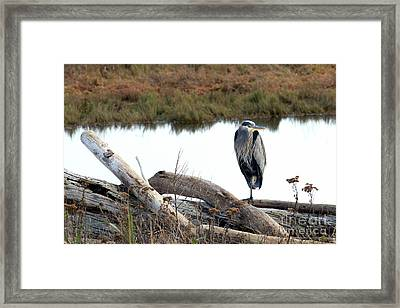 Gbh On Log Framed Print by Sharon Talson