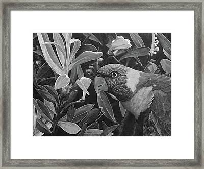 G'day Mate - Charcoal Framed Print by Julie Turner