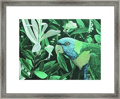 G'day Mate - Jade Framed Print by Julie Turner