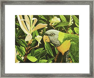 G'day Mate - Lemonlime Framed Print by Julie Turner