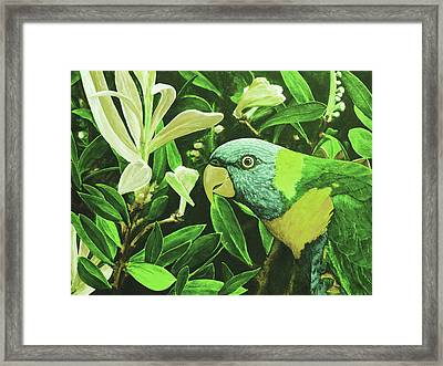 G'day Mate - Olive Framed Print by Julie Turner
