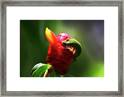 Framed Print featuring the photograph Gecko #1 by Anthony Jones