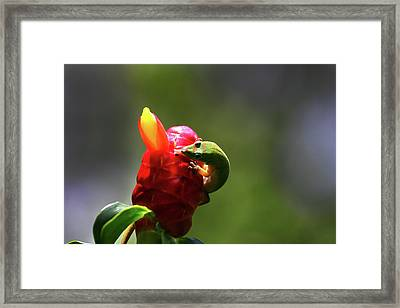 Framed Print featuring the photograph Gecko #2 by Anthony Jones