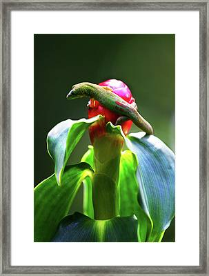 Framed Print featuring the photograph Gecko #3 by Anthony Jones