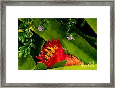 Gecko Aloha All Proceeds Go To Hospice Of The Calumet Area Framed Print