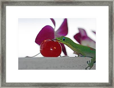 Gecko And Cherry Framed Print by Sue Mayor