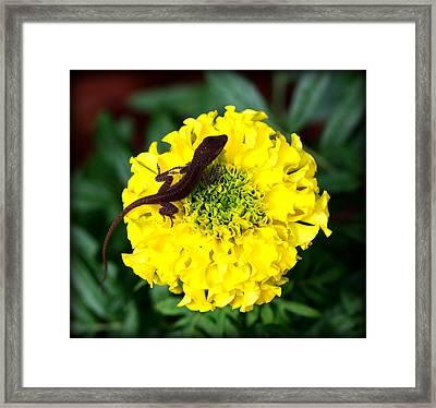 Gecko And Marigold Framed Print