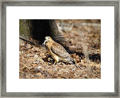 Gecko For Lunch Framed Print by George Randy Bass