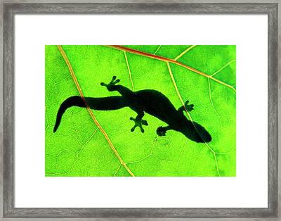 Gecko Silhouette On Green Leaf, North Shore, 1998 Framed Print