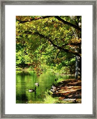 Geese By Pond In Autumn Framed Print by Susan Savad