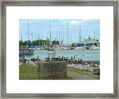 Geese By The Pier Framed Print by Deborah Selib-Haig DMacq