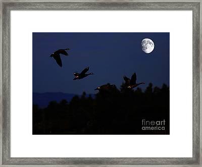 Geese Dancing In The Moon Framed Print