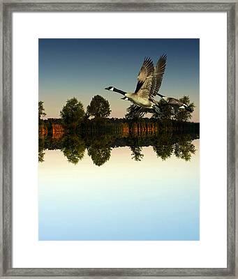 Geese Flynig Over Evening Pond Framed Print by Ron Kruger