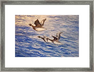 Geese In Flight Framed Print by Siona Koubek
