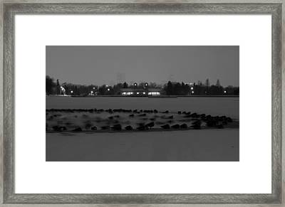 Geese In Frozen Lake Framed Print