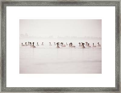 Geese In The Mist Framed Print by Roeselien Raimond