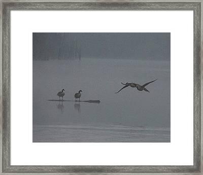 Geese In The Morning Fog Framed Print