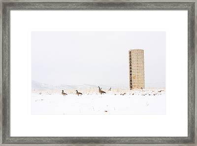 Geese In The Snow With Silo Framed Print by James BO  Insogna