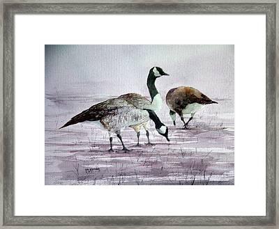 Geese Framed Print