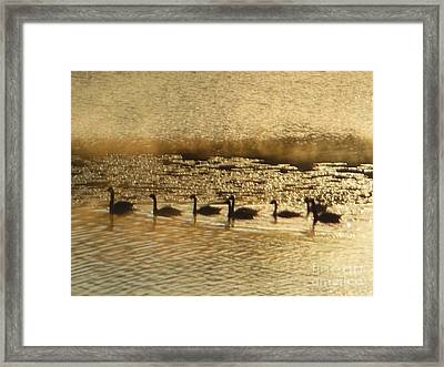 Geese On Golden Pond Framed Print