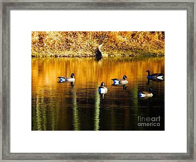 Geese On Lake Framed Print
