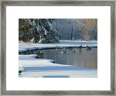 Geese On Pond Framed Print by Gregory Jeffries