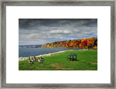 Geese On The Hudson Framed Print by Diana Angstadt