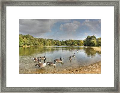 Geese On The Lake Hdr Framed Print