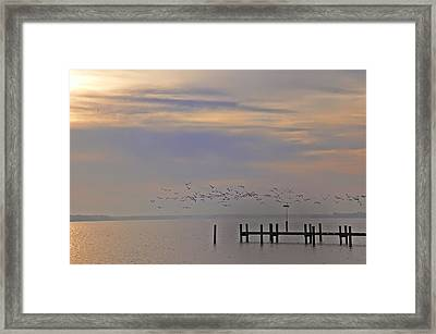 Geese Over The Chesapeake Framed Print by Bill Cannon