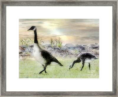 Geese Peace Framed Print by Anita Faye