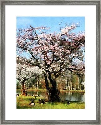 Geese Under Flowering Tree Framed Print by Susan Savad