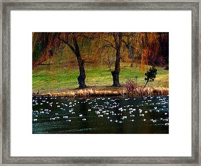 Geese Weeping Willows Framed Print
