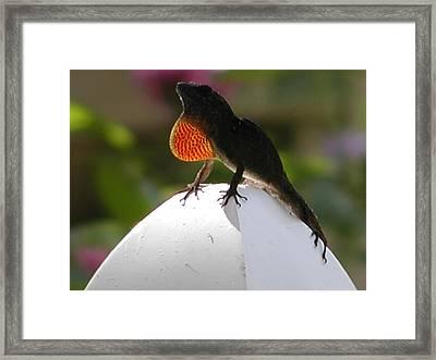 Gekko Framed Print