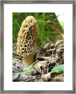 Gem Of The Forest - Morel Mushroom Framed Print by Angie Rea
