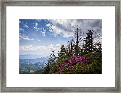 Rhododendrons - Roan Mountain Framed Print