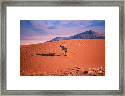 Gemsbok Framed Print by Eric Hosking and Photo Researchers