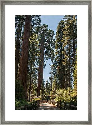 General Grant Tree Kings Canyon National Park Framed Print